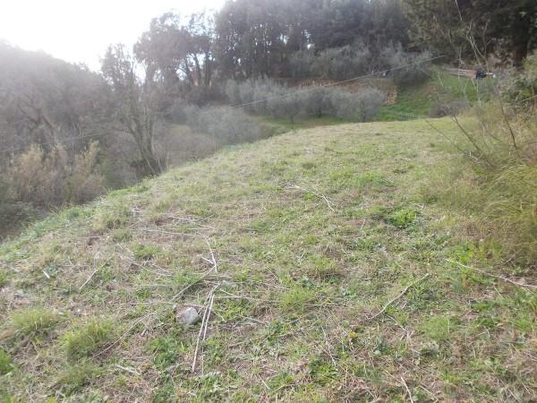 Riferimento SVM01 - terreno edificabile in Compravendita in Casale Marittimo