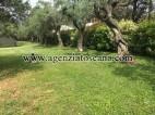 Villa Con Piscina in vendita, Seravezza - Marzocchino -  6