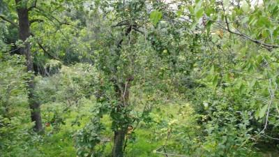 Terreno Agricoloin Vendita, Vado Ligure - Sant' Ermete - Riferimento: a terreno3