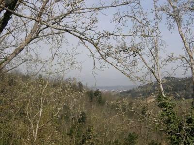 Casolare In Vendita, Palaia - Riferimento: 215-foto11