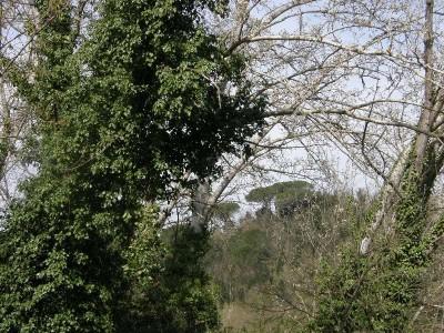 Casolare In Vendita, Palaia - Riferimento: 215-foto10
