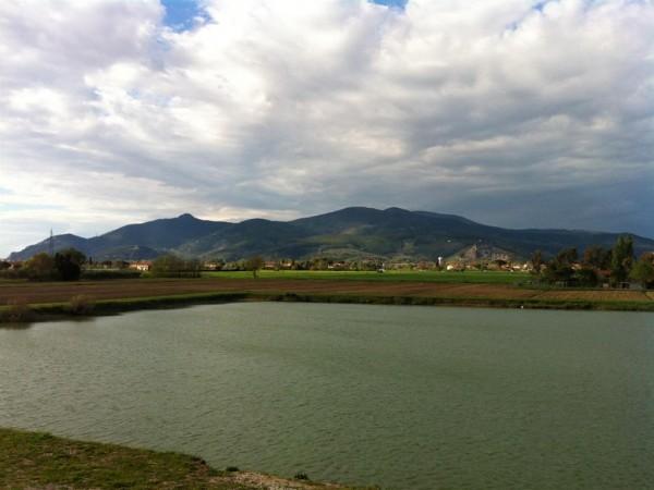 Riferimento 466 - Azienda Agricola per Vendita in Latignano