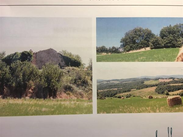 Riferimento 587 - Azienda Agricola per Vendita in Montecastelli Pisano