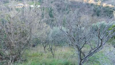 Terreno Agricoloin Vendita, Vado Ligure - San Genesio - Riferimento: aprter