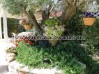 Villa With Pool for sale, Pietrasanta - Crociale -  8