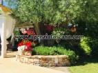 Villa With Pool for sale, Pietrasanta - Crociale -  9