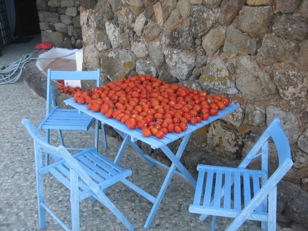 Riferimento SV22 - villetta in Compravendita in Pantelleria