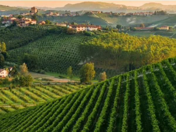 Riferimento 628U - Azienda Agricola in Vendita a Castello Di Annone